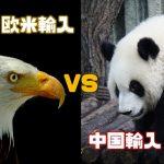 欧米輸入 vs 中国輸入!輸入ビジネスの王道2パターンを徹底比較